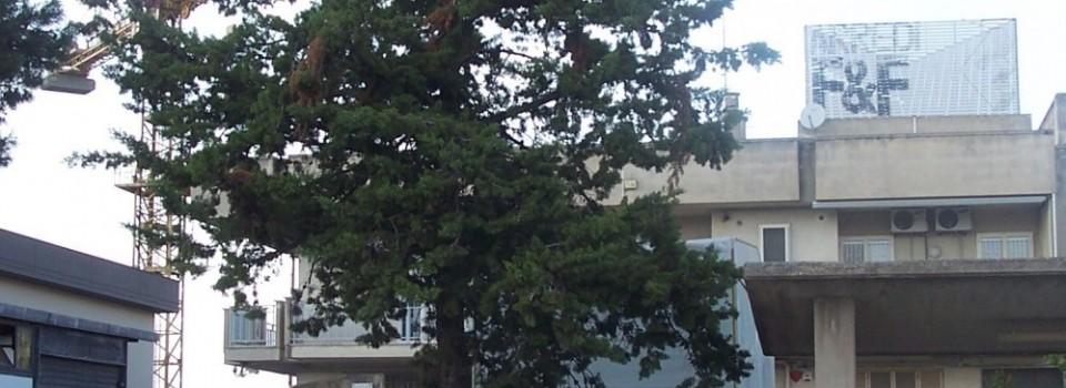 Manutenzione Falegnameria Fiore, Altamura